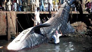 5 Shocking Fishing Moments Caught On Camera