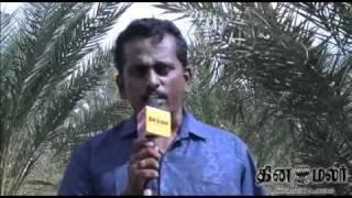 dates business growth in tamilnadu - DINAMALAR