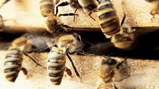 getlinkyoutube.com-Bienen Honigernte und viel mehr | Imkerverein Besigheim führt durch das Bienenjahr