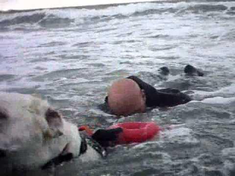 S.A.U.C.S. Cani da Salvataggio - Addestramento mare mosso