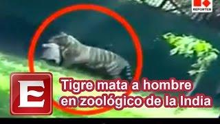 getlinkyoutube.com-Tigre mata a hombre en zoológico de la India