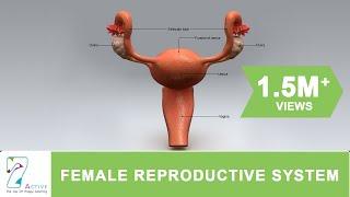 getlinkyoutube.com-The Female Reproductive System of Human