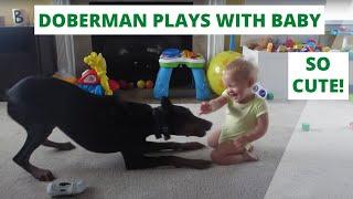 getlinkyoutube.com-Doberman playing with Baby