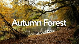 getlinkyoutube.com-AUTUMN FOREST Relaxation Video, 1 Hour, Chillout w Nature Sounds