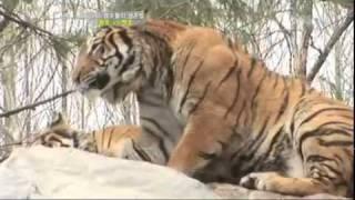 getlinkyoutube.com-TV동물농장 509회 4월24일 다시보기_09