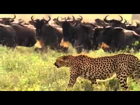 SERENGETI part 1 of 5 (2004)
