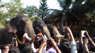 Thalappokka malsaram at Kattuvally Pakalpooram 2014