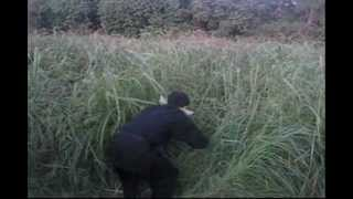 NINJA TRAINING MANUAL (Tall grass training) video example #5