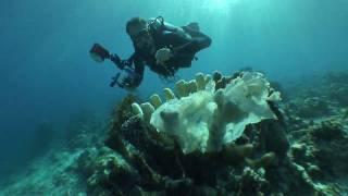 "getlinkyoutube.com-The World Ocean ""Trashed"""