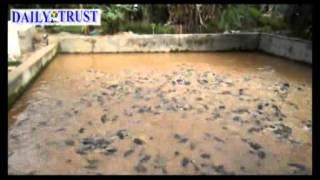 getlinkyoutube.com-Nigerian Undergraduate, making it big in Fish Farming