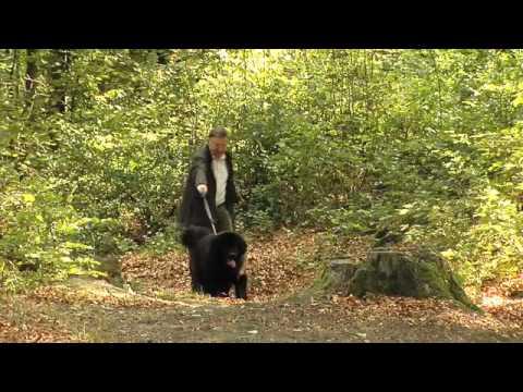 Lär hunden gå fint i kopplet utan att dra! -Annelie Lundkvist