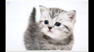 lagu populer kucing tamu tak diundang meong