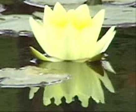 Taller de felicidad c mo podemos encontrar la paz interior for Encontrar paz interior