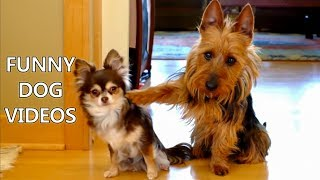 *Try Not To Laugh Challenge* Funny Dogs Compilation   Funniest Dog Videos 2017