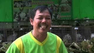 getlinkyoutube.com-Dari Hobi, Peternak Kelinci Raup Omzet Ratusan Juta Rupiah per Bulan -NET5