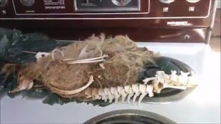 ABANDONED & DISGUSTING : Exploring a hoarders house. FOUND DEAD ANIMALS.