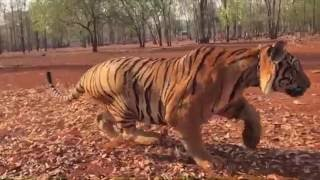 Pulimurugan Malayalam Movie Stunt Making Video With Tiger - Peter Hein , Mohanlal