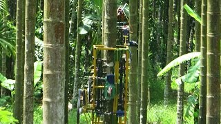 getlinkyoutube.com-Areca Palm Climbing Machine