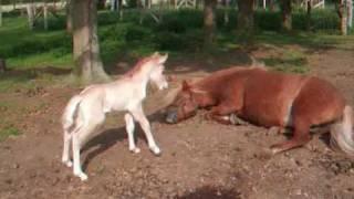 getlinkyoutube.com-The world's cutest baby horse !