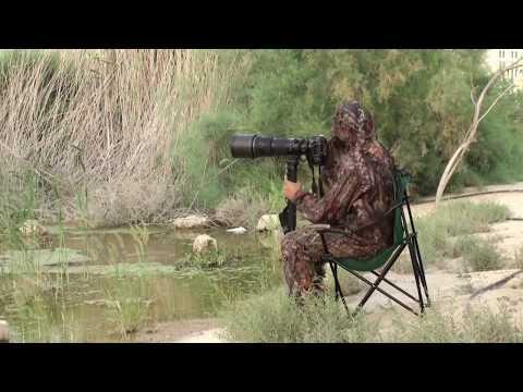 اساسيات في تصوير ورصد الطيور