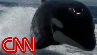 getlinkyoutube.com-Killer whales surprise couple on boat