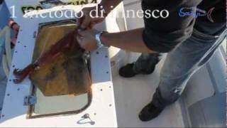 getlinkyoutube.com-Innesco x calamari traina con vivo!!!