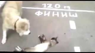 getlinkyoutube.com-gato se hace el muerto frente a perro hambriento