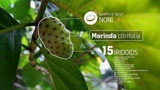 getlinkyoutube.com-Morinda - Najlepsze co daje Ci Ziemia. Lektor PL