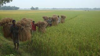 ও আমার দেশের মাটি - O Amar Desher Mati Rabindrasangeet kalyansunder