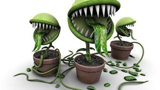 getlinkyoutube.com-Опасные для здоровья комнатные растения