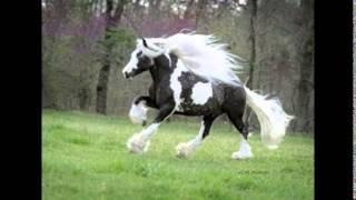 getlinkyoutube.com-「世界一美しい馬&スレイプニル&馬とシマウマ&世界一小さな馬」
