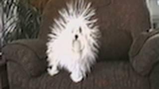 Statik Enerjinin Köpekler Üzerindeki Etkisi