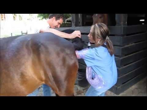 Ecografía veterinaria en equinos - Determinación de Preñez