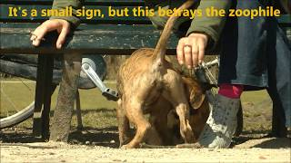 getlinkyoutube.com-A Girl and her Dog - Mujeres que juegan con los Perros - حب الحيوانات