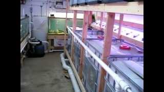 getlinkyoutube.com-DIY Tilapia Small Scale Aquaculture System - Vid # 4