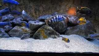 getlinkyoutube.com-How to keep your African tank crystal clear