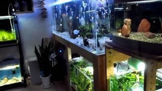getlinkyoutube.com-我が家の熱帯魚水槽 ディスプレイ