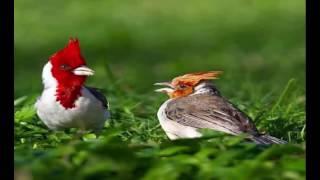 getlinkyoutube.com-Beautiful Birds Photography of The World|Prettiest Birds|Birds Picture| Love Birds|Birds Photos