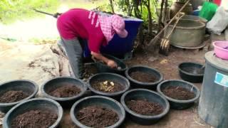 getlinkyoutube.com-ข่าวดึก NBT เลี้ยงไส้เดือน อาชีพทำเงินให้เกษตรกร (26 ม.ค.59)