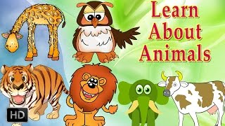 getlinkyoutube.com-Learn About Animals - Animal Sounds - Learning Animals For Toddlers - Zoo Animals