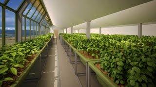 أكبر مشروع اماراتي في الزراعة المائية Hydroponics UAE
