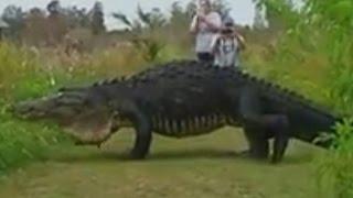 getlinkyoutube.com-Massive Prehistoric Monster Caught On Camera