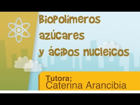 Biopolímeros-azúcares y ácidos nucleicos