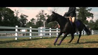 getlinkyoutube.com-BLACK BEAUTY - Official International Trailer