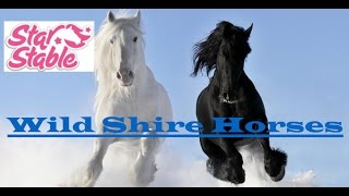 {♥}Star Stable Online{♥)~ Wild Shire Horses