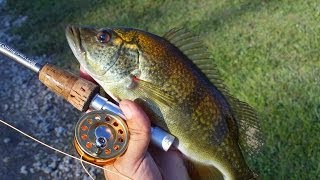 getlinkyoutube.com-Peacock bass Hybrids with Micro Fly Reel by Penfishingrods.com