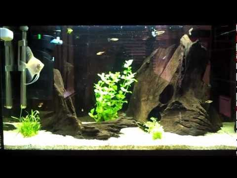 Come decorare un acquario di acqua dolce fai da te mania for Arredamento acquario dolce
