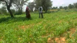 getlinkyoutube.com-Rajasthani hot video sxxx.