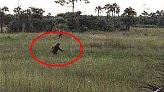 getlinkyoutube.com-10 Most Convincing Bigfoot Recordings