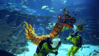 getlinkyoutube.com-Chinese New Year underwater dragon dance at S.E.A. Aquarium